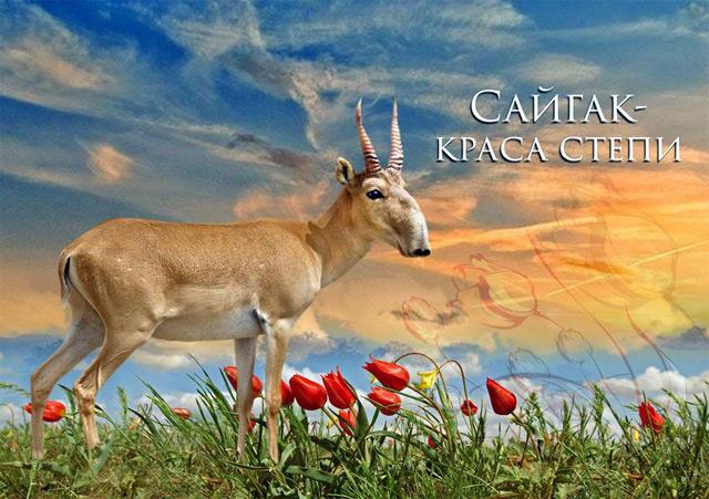 Заповедник Калмыкии